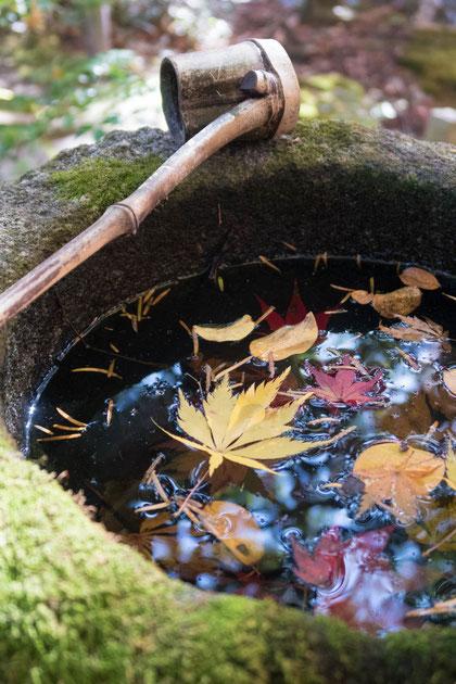 京都亀岡 苗秀寺の紅葉 手水鉢