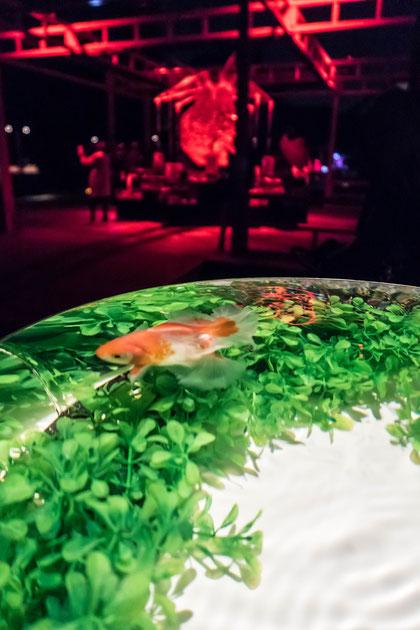 二条城アートアクアリウム城~京都・金魚の舞~(ライトアップ)