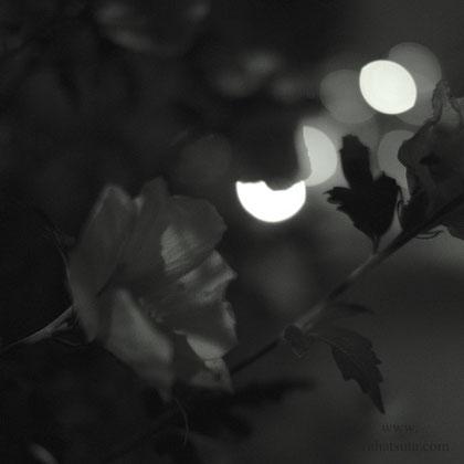 花は夜ひらく