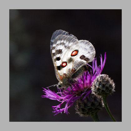 Im Kontrast zu den Schatten der Umgebung sieht man das Aufleuchten des Lichtes in den Flügeln