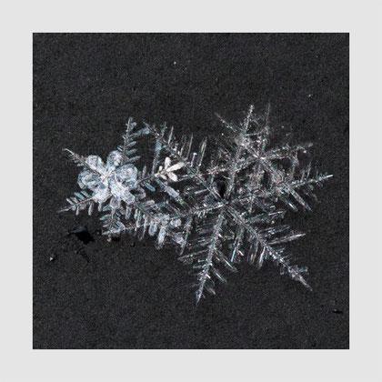 Bitte vor allem rechts der beiden 'Blüten' die blattartige Eisform beachten.