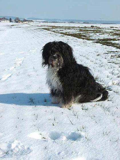 Milkas Tochter Enya im Schnee