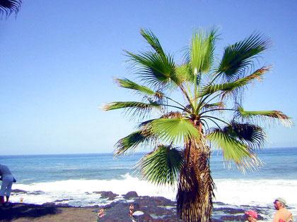 Bild: Palme am Strand am Playa Jardin bei Puerto de la Cruz, nur wenige Meter von der Immobilie entfernt.