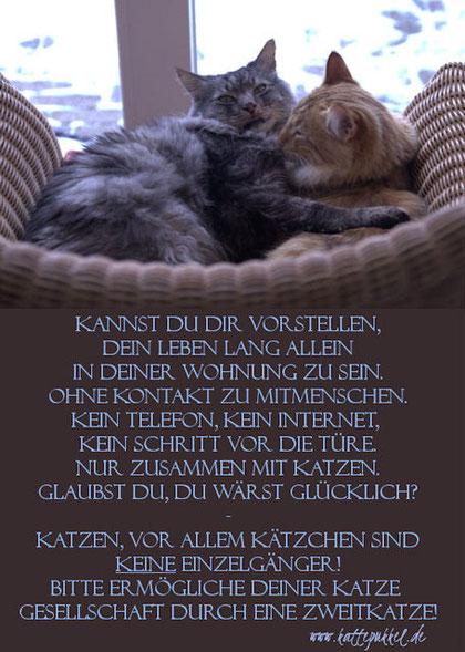 die Geschichte von Franzl zwo   -   © Sabine Hilderhof / Kattepukkels