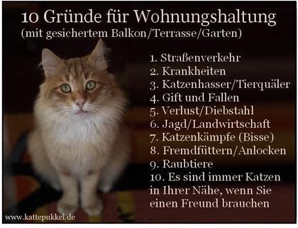 © Sabine Hilderhof / Kattepukkels