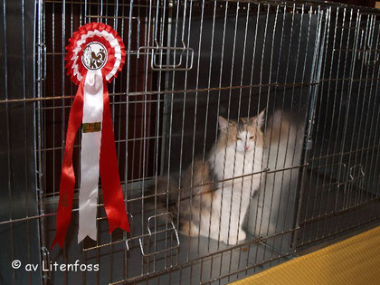 Warten auf die Konkurrenten für Best in Show