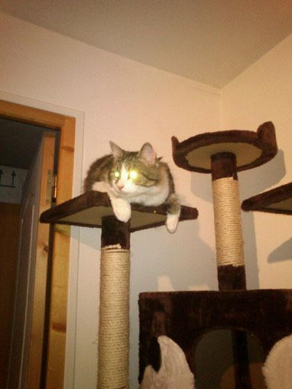 Arbre à chat TITAN Luxe