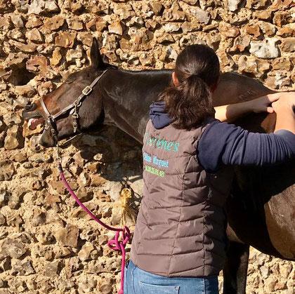 Produit Florènes de soins pour les chevaux (membres, tendons, molettes, dos, muscles, arthrose, conflits épineux, tendinite, remplace l'argile, récupération, échauffement,...)