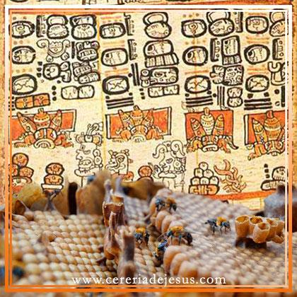 Cera de abeja maya (Melipona beecheii)