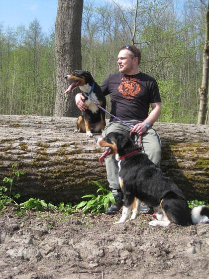 Appenzeller Sennenhunde Rudel
