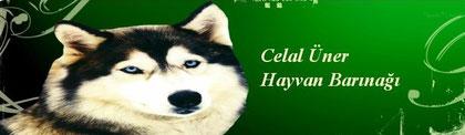 Celal Üner, Örnekköy, Karsiyaka, Tierschutz türkei, Strassentiere, Hayvan Hakkleri, köpek, köpekler, Izmir
