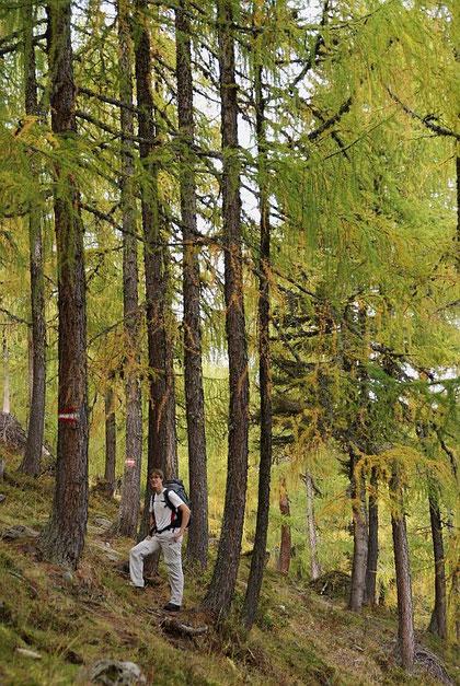 Im schönen Lärchenwald