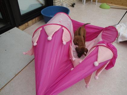 Gott sei Dank ein Pop Up Zelt!