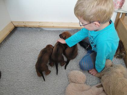 Mein Enkelkind Luca wieder zu Besuch bei den Welpen