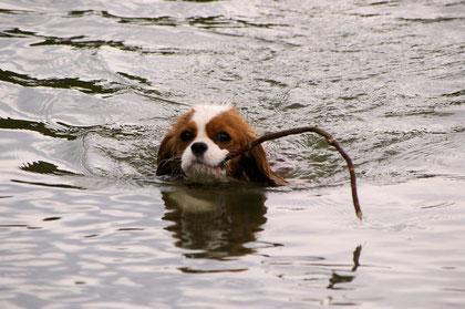Wergenie - unsere Schwimmerin