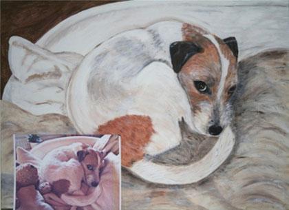 Amy (Jack Russel Terrier)