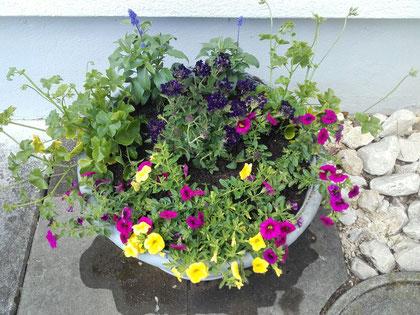 Pflanzen Frühling