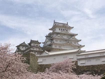 白鷺城と桜で雪景色のよう