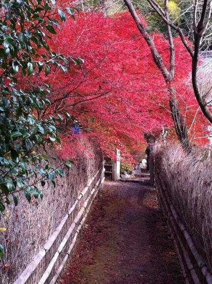 直指庵の竹垣の小道