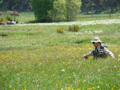 Luc Poisson dans les prairies de l'Aubrac