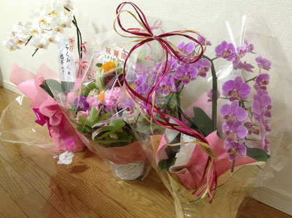 ほぐし整体らくみんの開店当初のお祝いのお花です。2013年9月8日にオープンしました。