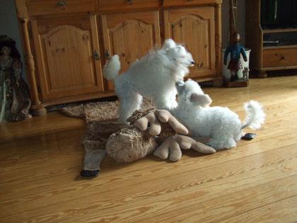 Brutus am spielen mit seiner Mama