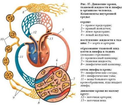 рис№5