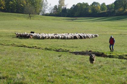 Pastoralisme près de St-Aubin de Branne