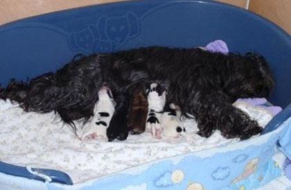 Eine zufriedene Mami mit ihren Babies.