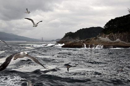 Pursuing gulls at Jōdo-ga-hama