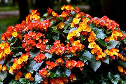 Orangerote Blumen