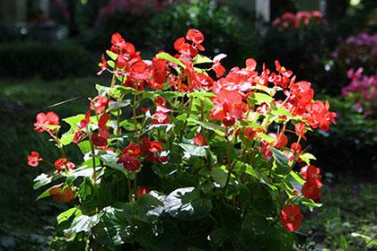 Orte und Zeitpunkte für Blumenschmuck