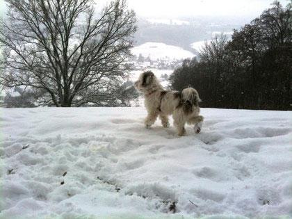 Endlich wieder Schnee!!!