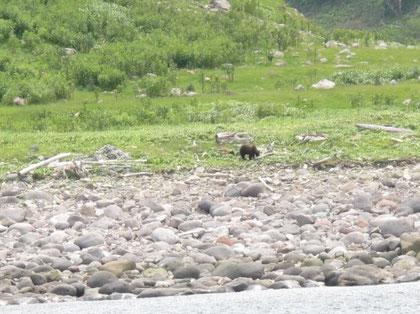 10:38 野生のヒグマを発見。初めて野生のヒグマを見て興奮した。