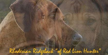 Hier gehts zu einer wunderbaren Hunderasse und der HP unserer Züchterfreundin Ilona !Rhodesian Ridgeback-Zucht mit Verstand und Liebe!