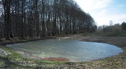 Nach der Schneeschmelze ist der Wasserspiegel der beiden neuen Kleingewässer - die dadurch gar nicht mehr so klein sind - am 'Fledermauswald' deutlich angestiegen.