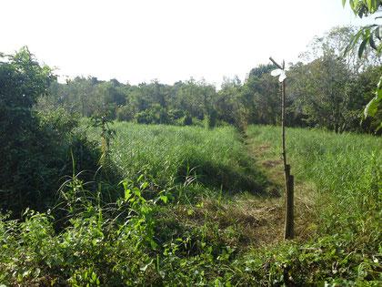 Land for sale near Khao Lak, Thailand.(5')