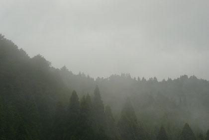 梅雨の最中