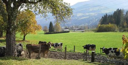 Dieses Bild zeigt die Mitarbeiterinnen der Holstein Züchter, so nennen sie ihre Kühe