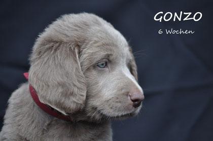 Gonzo ist noch immer ein sehr ruiger Rüde mit ausgesprochen guter Nase.