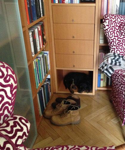 wie gut, dass es überall für Hundekinder gute Regalschlafplätze gibt...