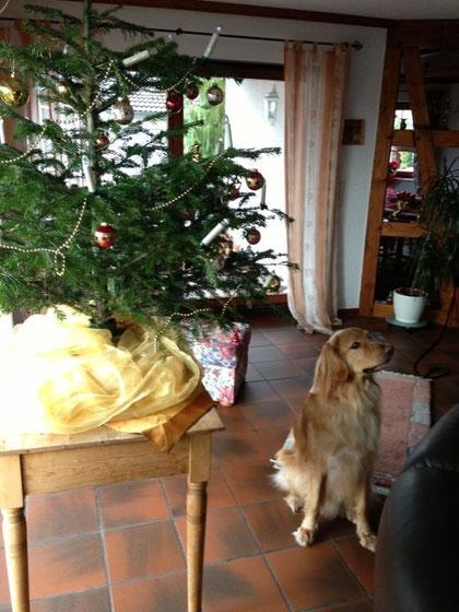 Merlins Weihnachtsgruß 2012