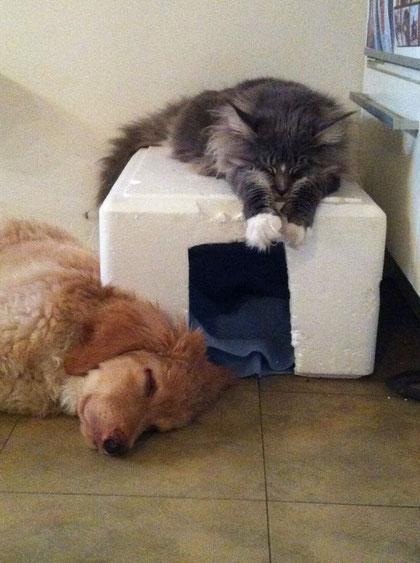 Booker träumt davon, dass er mit den Katzen längst alles geklärt hat...