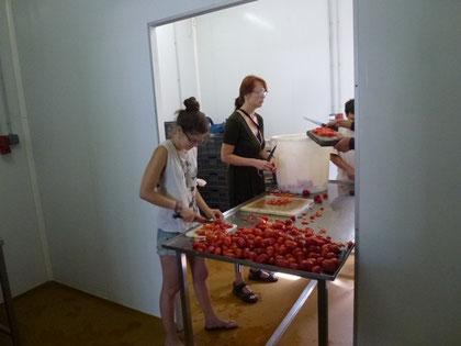 Mas de Granier, préparation des tomates dans la conserverie