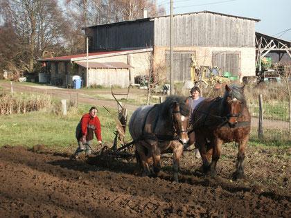 Le labour avec les chevaux