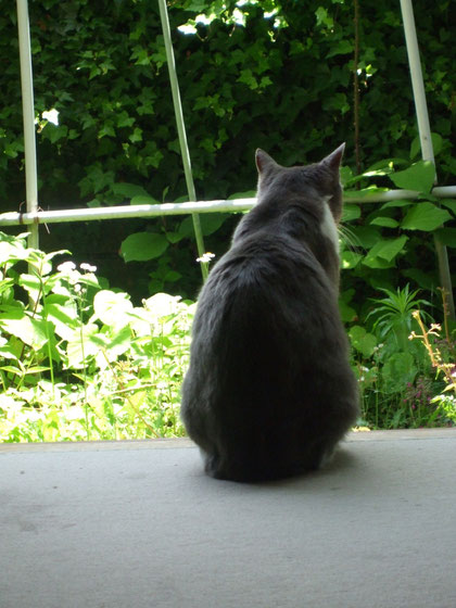久しぶりに入った家の中から外を見るグリ