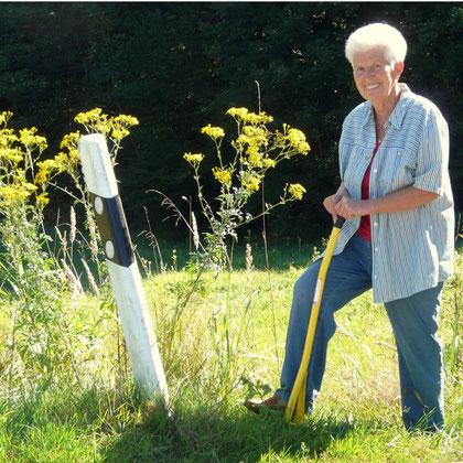 Marianne Stöckeler beim Ausstechen des Raukenblättrigen Kreuzkrautes
