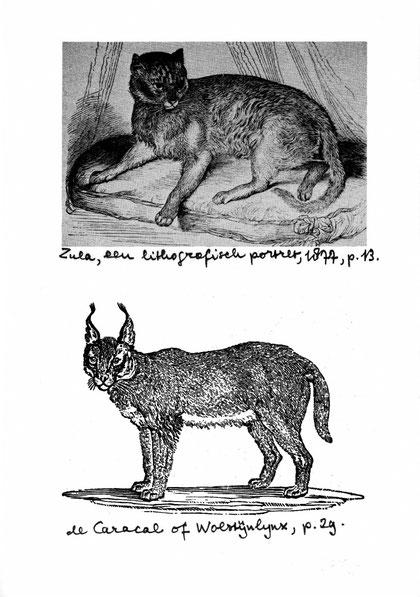 Zula (Lithographie v. 1877) & ein Caracal, mögliche Vorfahren der Abessinier, Quelle: Abessijnen en Somalis von Jean-Paul Maas
