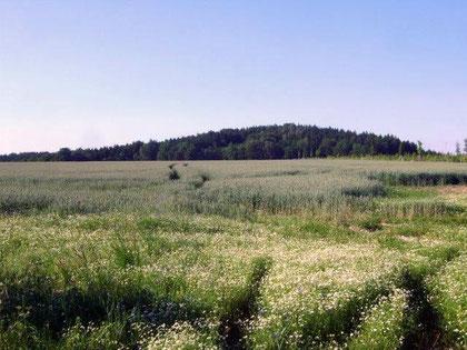 Der Rüdenberg, von Oberottendorf aus gesehen