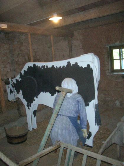 La fermière trait une authentique vache vosgienne